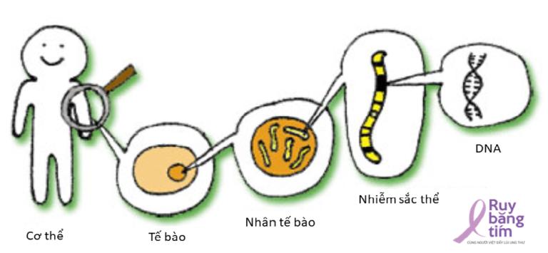 Có thể tầm soát ung thư bằng giải trình tự gen thế hệ mới NGS không?
