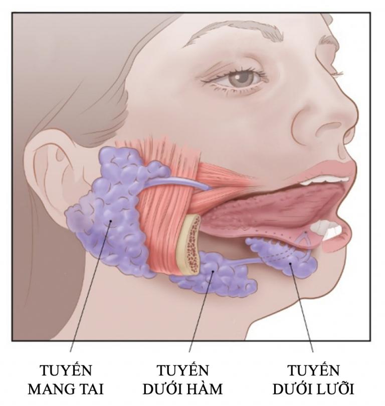 ung thư tuyến nước bọt