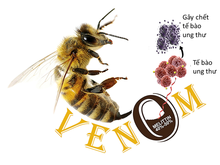 nọc độc ong mật trị ung thư